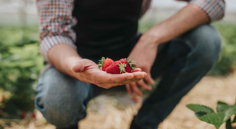 Erdbeeren_verkauf